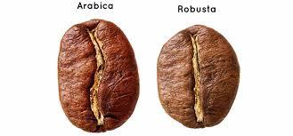 Diferencias entre cafe arabica y robusta