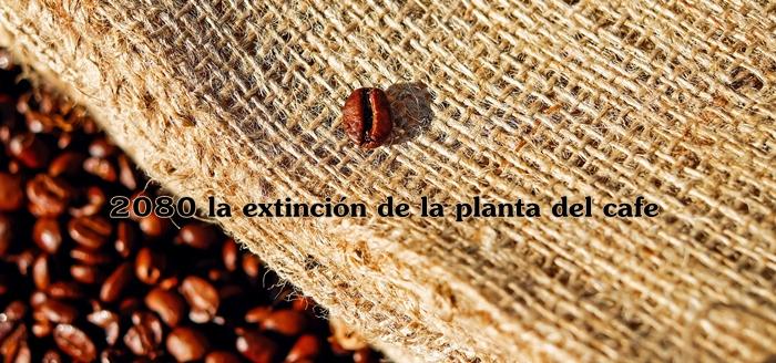 extincion cafe